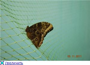 Выставка живых бабочек в Хабаровске. 0124bb7594c0t