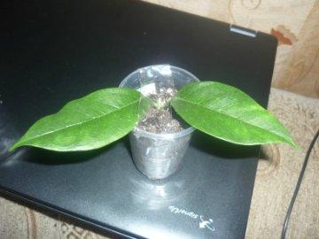 декоротивно-лиственные и красивоцветущие растения - Страница 3 C5314f889029