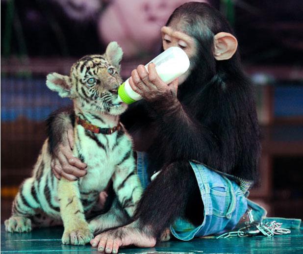 Забавные животные - Страница 4 E3f33eb3ec38