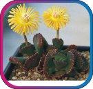 продам семена экзотических растений - Страница 3 B9134597ce56