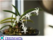 Sevgilim ( мои любимые) A26f7477b13bt