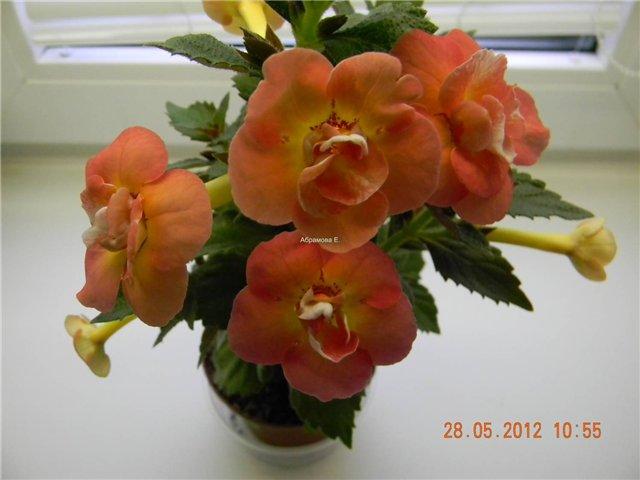 Выставка цветов - Страница 4 F236598a50ba