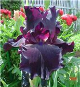 Совместное творение цветов из лент - Страница 2 Afae850089act