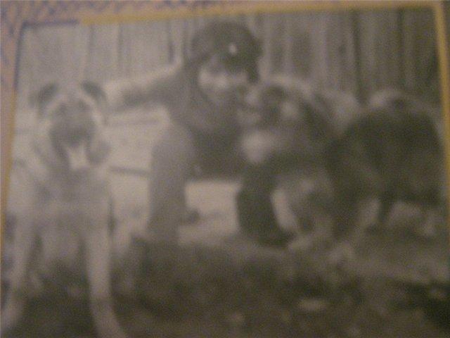 """Питомник """"Прима Персона"""". Мои собаки-моя жизнь! 99a467e9ab5d"""