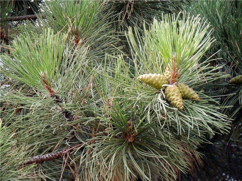 Фотографии цветов и деревьев 48257d68050c