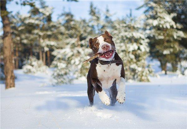 Интернет-магазин Red Dog- только качественные товары для собак! - Страница 3 F836db63cf19