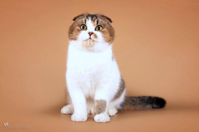 Кошки-Коты-Котята 44d5d89b3da4