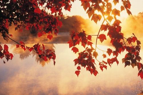 Осеннее настроение 241ed234df09