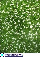 Растения для альпийской горки. 5625ed562a60t