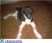 Новый член семьи, Кира - ребЁнко... - Страница 2 2a024d5a8207t