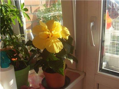 Продам, общие объявления по продаже растений 9f8e2c5d4962