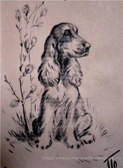 Рисую собак по фото - Страница 6 484a9bb1fae9