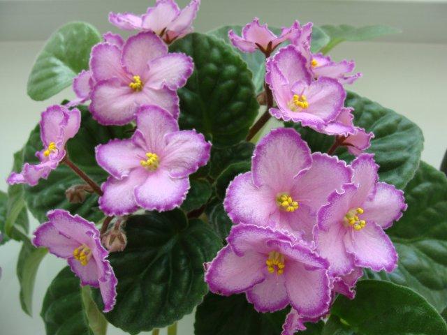 Мои цветочки - Страница 39 1adbb26321ea