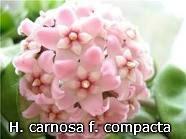 декоротивно-лиственные и красивоцветущие растения - Страница 3 Ef8fe36781ab