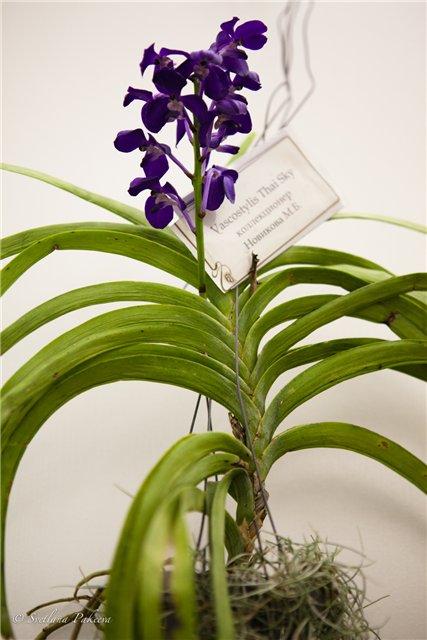 Выставка орхидей в Государственном биологическом музее им. К.А.Тимирязева 4f8f1b502b63