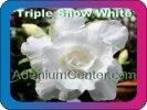 продам семена экзотических растений - Страница 3 B5a56e8cc0c5