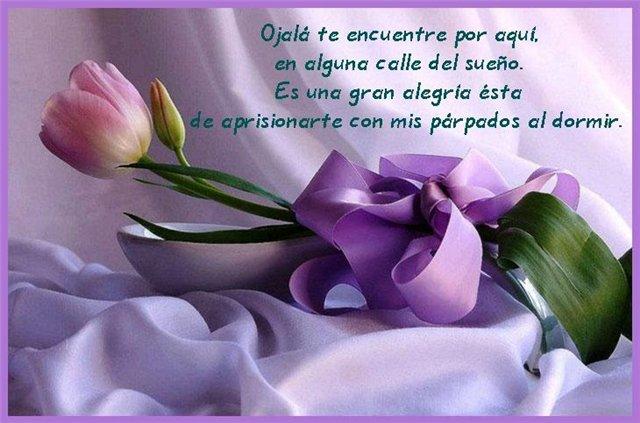 Te hablo con un tulipan - Página 2 C298a738ecb3