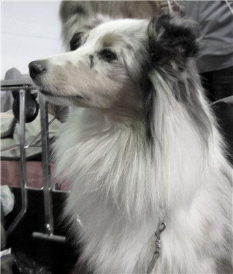 Рисую собак по фото - Страница 6 03bc385c4369