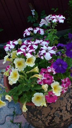 И мои хвастушки-цветушки! - Страница 36 C8c252950d17