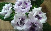 Весеннее  цветение (Хваст от Веры) - Страница 8 1bd4c9093fddt