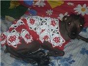 Одежда для животных 3c65cbc0d5cet