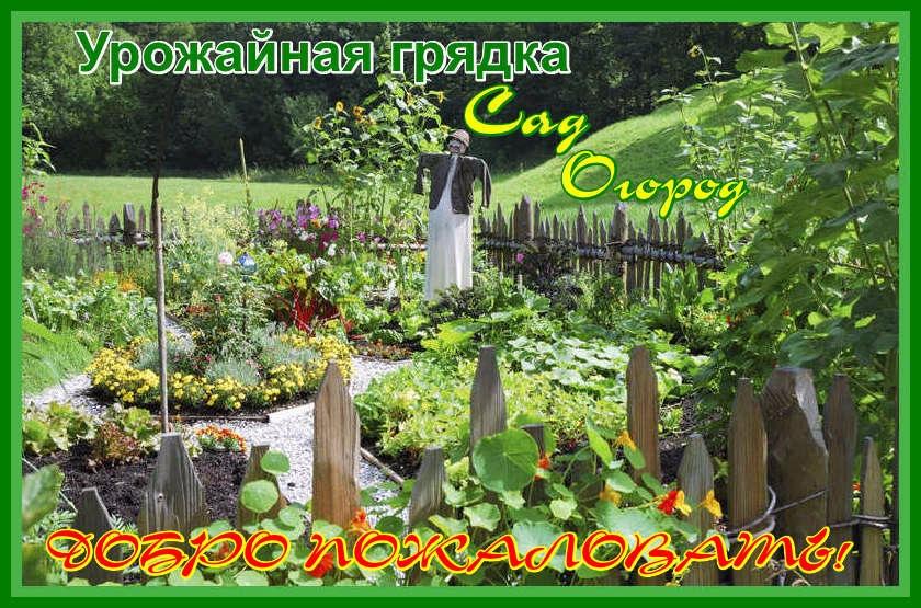 Урожайная грядка. Сад и огород.