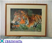 Творения shrek1983 C633b09f577bt
