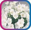 продам семена экзотических растений - Страница 3 Ecc143d799cc