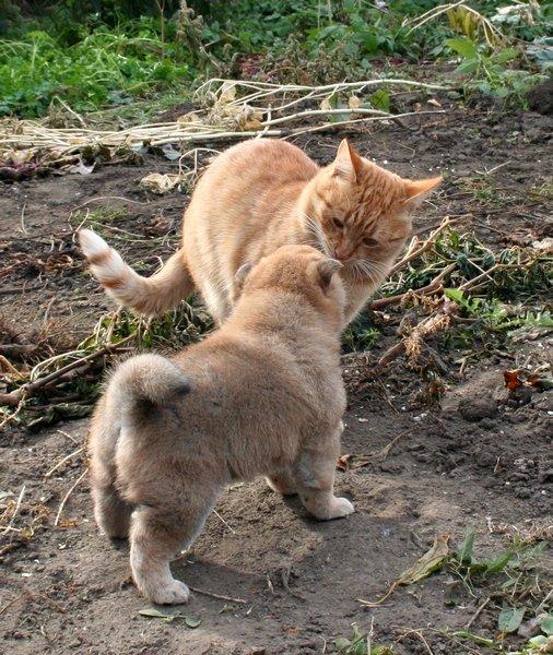 Хочу шибу, но дома кот… рисковано? - Страница 2 4f21068dd997