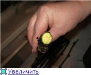 Виноград- секреты выращивания 8b5f8f826541t