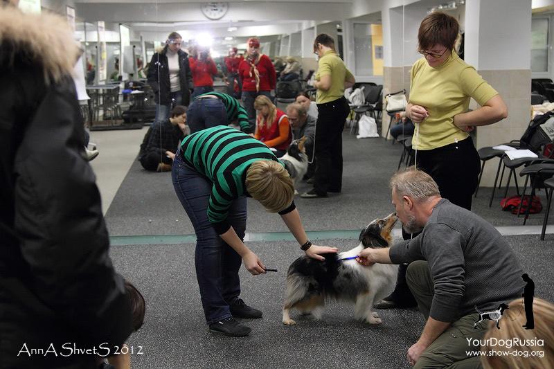 Семинар-практикум по анатомии и движениям собак с Джерардом О'Ши  B1b09b9f4c7d