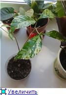 Заказ  от exoticplantsasia-2013. Отзывы.советы по адаптации. - Страница 9 42e718bada48t
