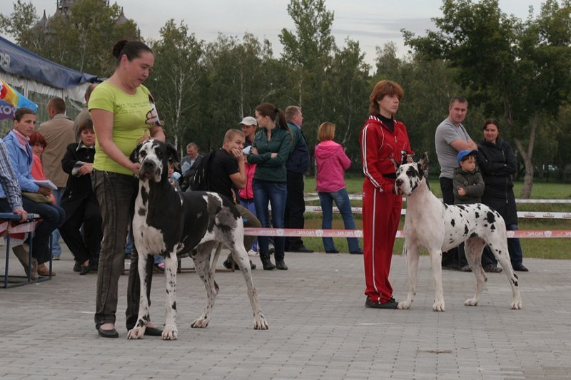 NATIONALE D'ELEVAGE 2013 NEUVIC - Страница 2 2b4a05309c89