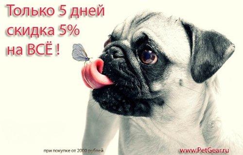 Интернет-зоомагазин Pet Gear - Страница 9 A84e6633468c
