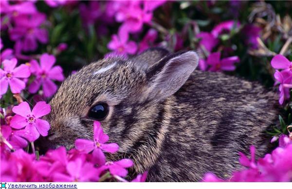 Фотографии разных животных A58adb9e8a0at