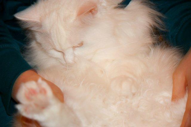 Коты, кошки, котята и все что с ними связано - Страница 4 F2350b883e79