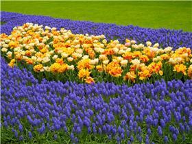 Рай тюльпанов или Кёкнхов - 2012 B295181cc58dt