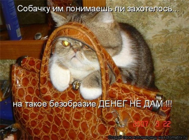 братья и сестры наши меньшие)) 2d31b0e347a7