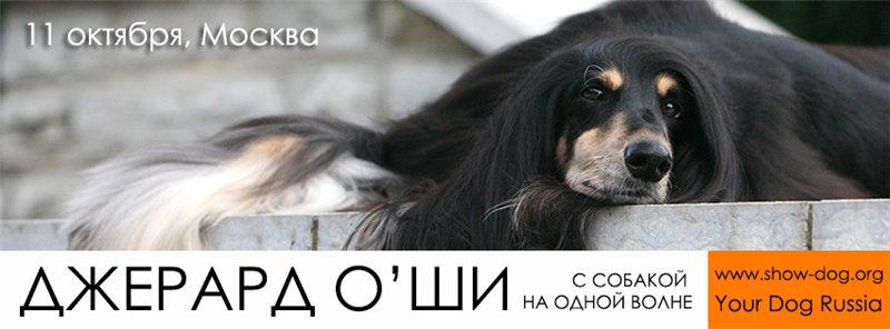 Джерард О'Ши - семинары по хендлингу и ринговой дрессировке в России Cdac42d24868