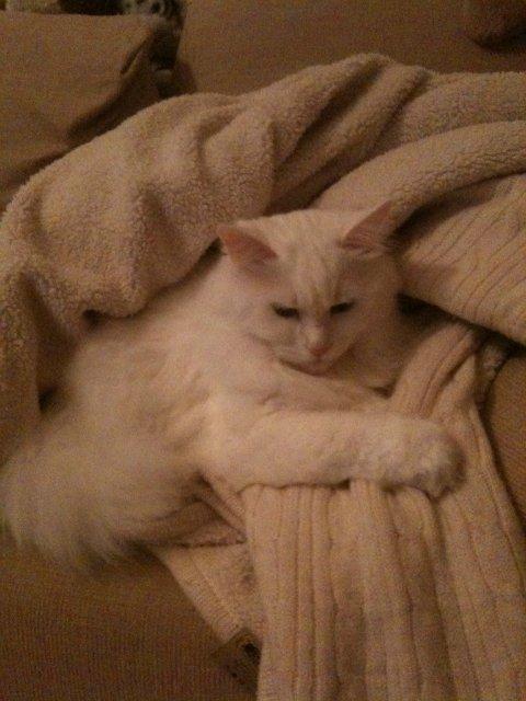 Коты, кошки, котята и все что с ними связано 5ea2023396af