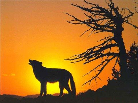 Тесты по теме волков (их много) 63b912528828