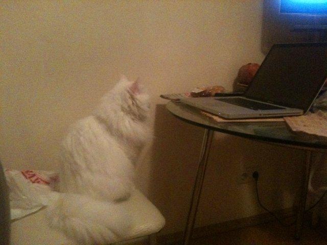 Коты, кошки, котята и все что с ними связано Be6aadacd162