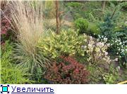 Cад Людмилы Ивановой из черкасс Fe8306754f6at
