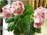 Садовые многолетние цветы - давайте меняться - Страница 3 32f837f81f75t