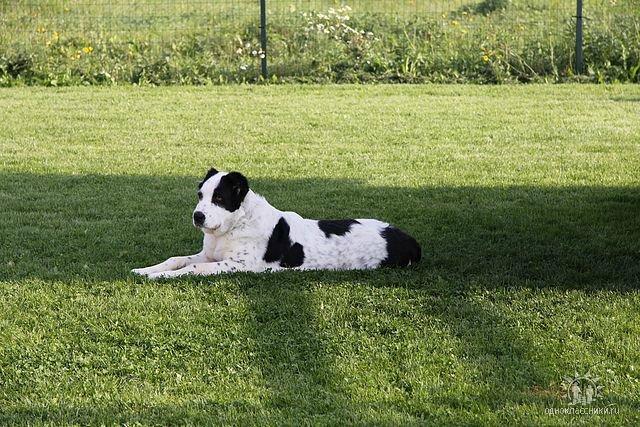Собаки Татьяны Моисеенковой, кот Мензурка - Страница 4 F4e5ab1935b6