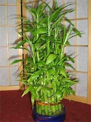 Орхидея в квартире Cc8b087e8094