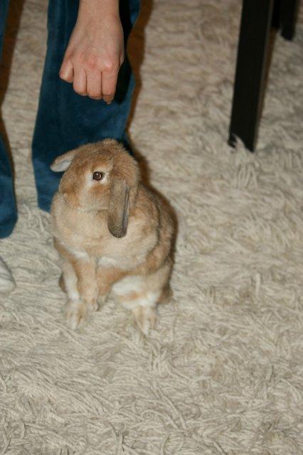 Кролики, декоративные и не очень) - Страница 2 87d0bfa45b59