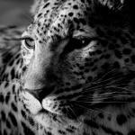 Аватары с животными - Страница 3 D098bd1ca164