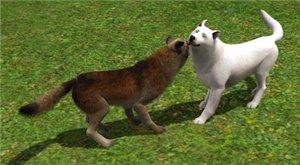 Экзотические, дикие животные, фэнтези - Страница 2 99f29f2fa260