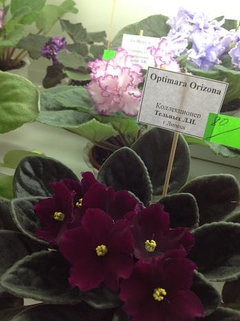 Выставка цветов - Страница 2 1473e6adbb78